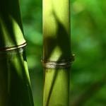Les différents tissus de carré lavable : le bambou